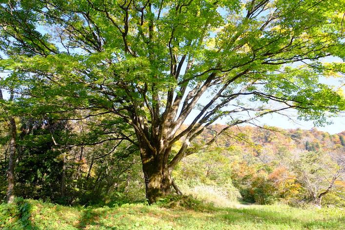 Mount Iouzen holy tree
