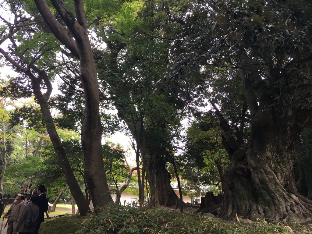 Forest bathing in the city